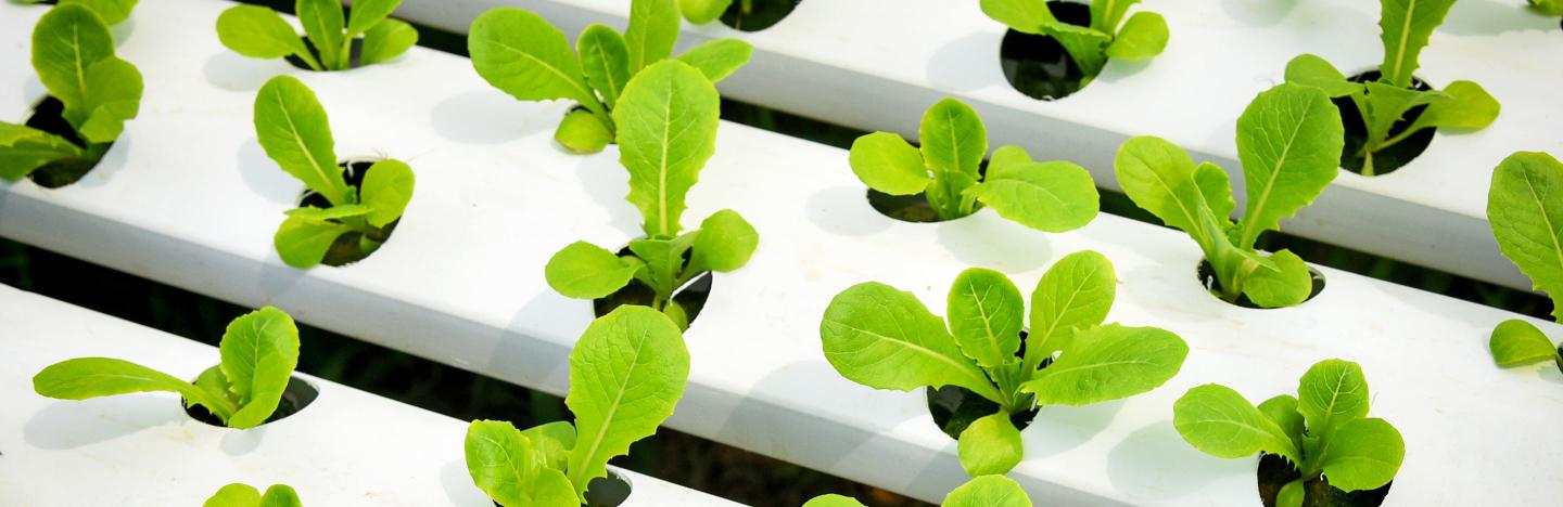 What is hydroponics and how to start?