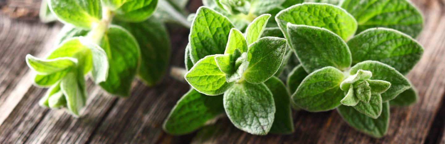 Some Known Factual Statements About How To Grow Marjoram Herb - Planet Natural