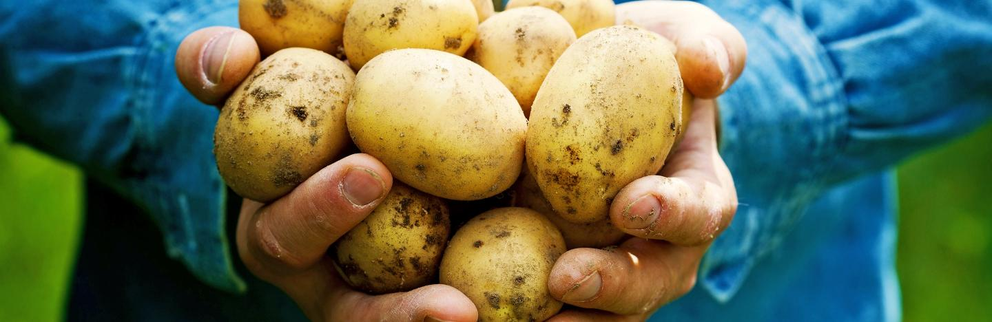 Potatoes When To Sow And Grow Lovethegarden