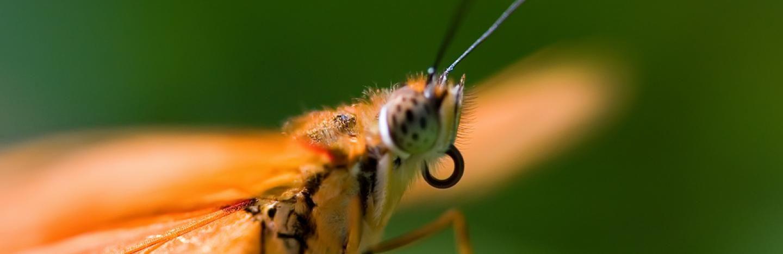 Lutter Contre Les Moustiques La Pause Jardin