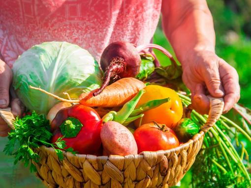 Growing and feeding plants, fruit and vegetables