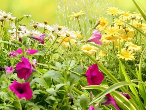 A Guide To Feeding Border Plants Love, How Often Do You Feed Bedding Plants