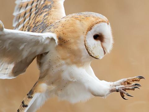 18 Amazing Facts About Birds Lovethegarden