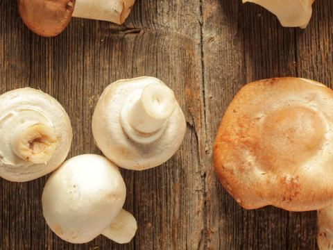 How To Grow Your Own Edible Mushrooms | Love The Garden