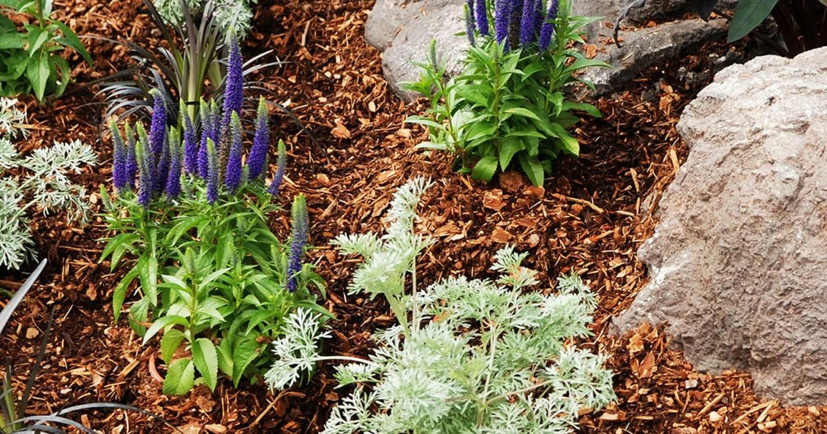 How To Mulch Your Garden And Why Love The Garden
