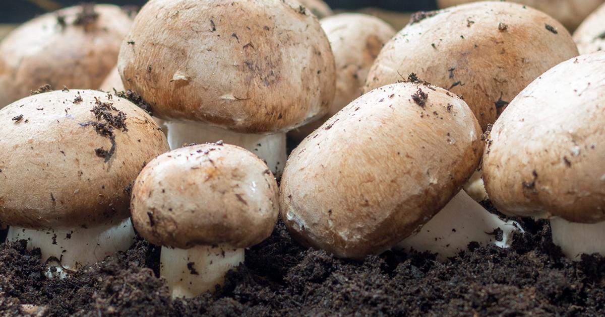 A Guide To Growing Mushrooms | Love The Garden