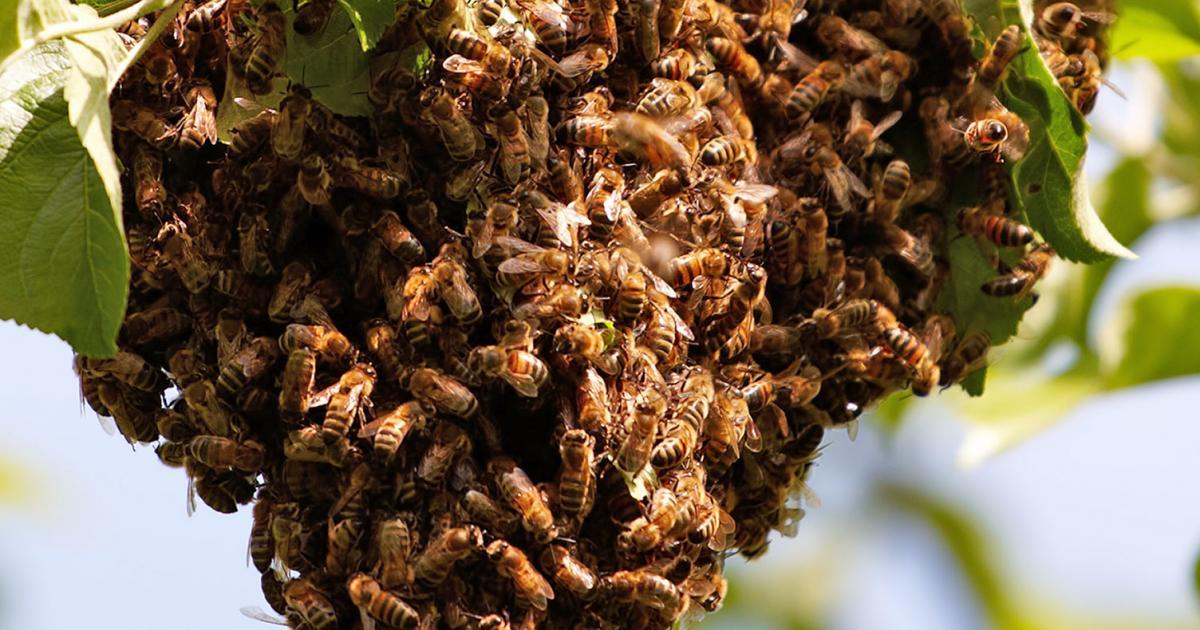 How to discourage bees into your garden | lovethegarden