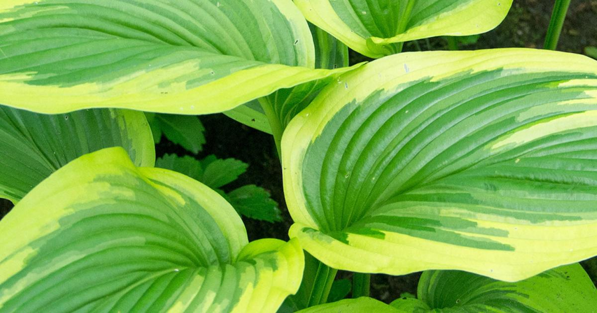 A guide to splitting perennials lovethegarden