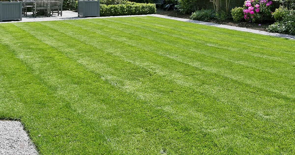 7 Lawn Care Tips Lovethegarden
