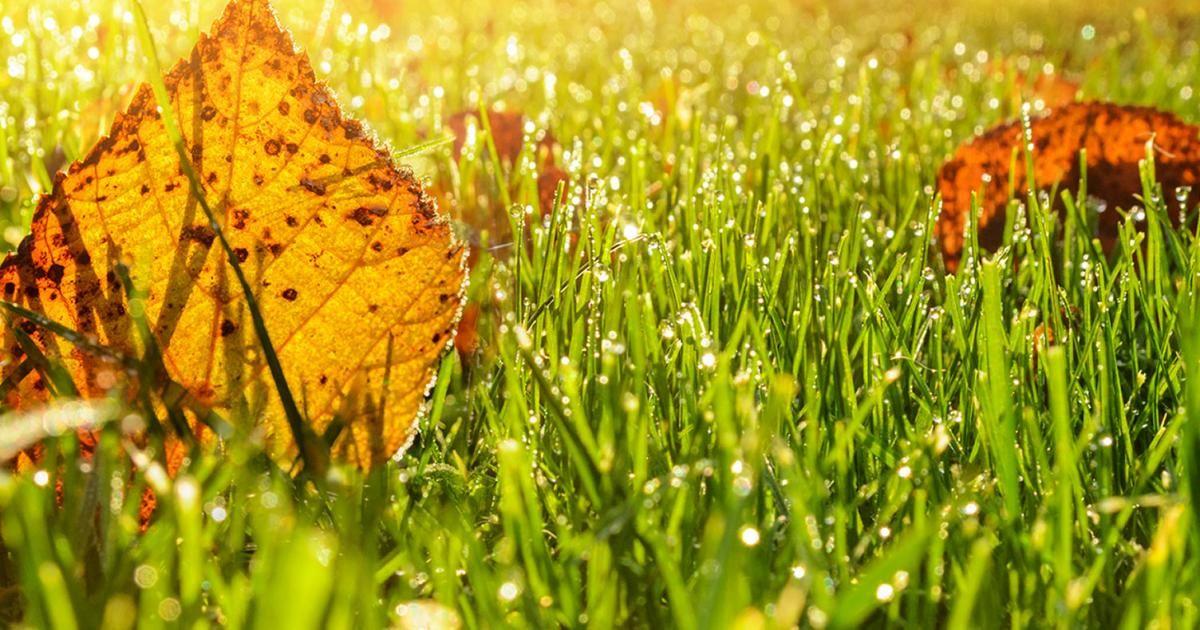 A complete guide to autumn lawn care | lovethegarden