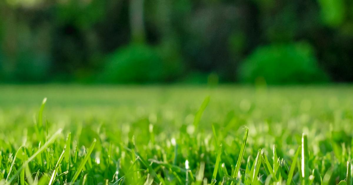 A complete guide to lawn and grass feeding | lovethegarden