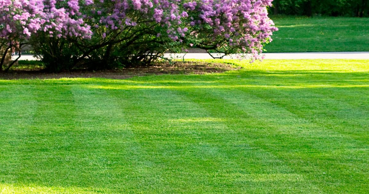 A guide to spring lawn feeding and care | lovethegarden