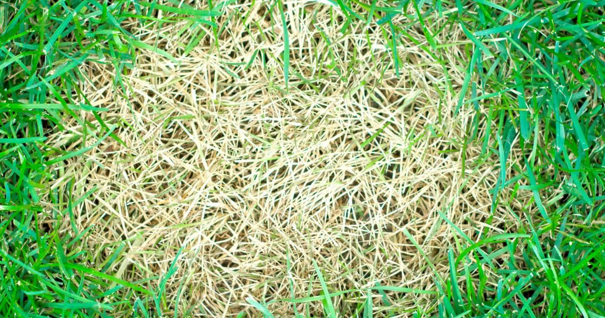 How To Control Amp Prevent Lawn Diseases Love The Garden
