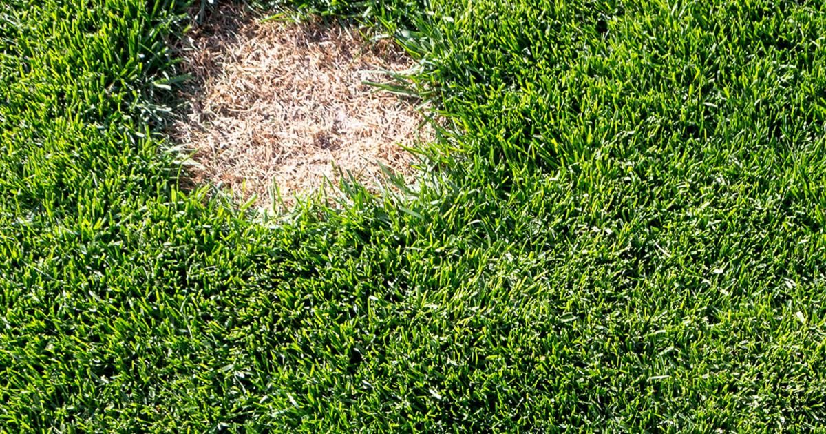 A Guide to Repairing Lawn Patches Love The Garden