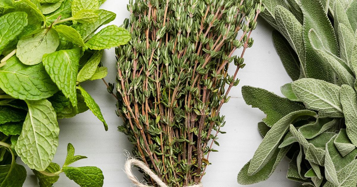 15 Popular Herb Myths Debunked | Love The Garden