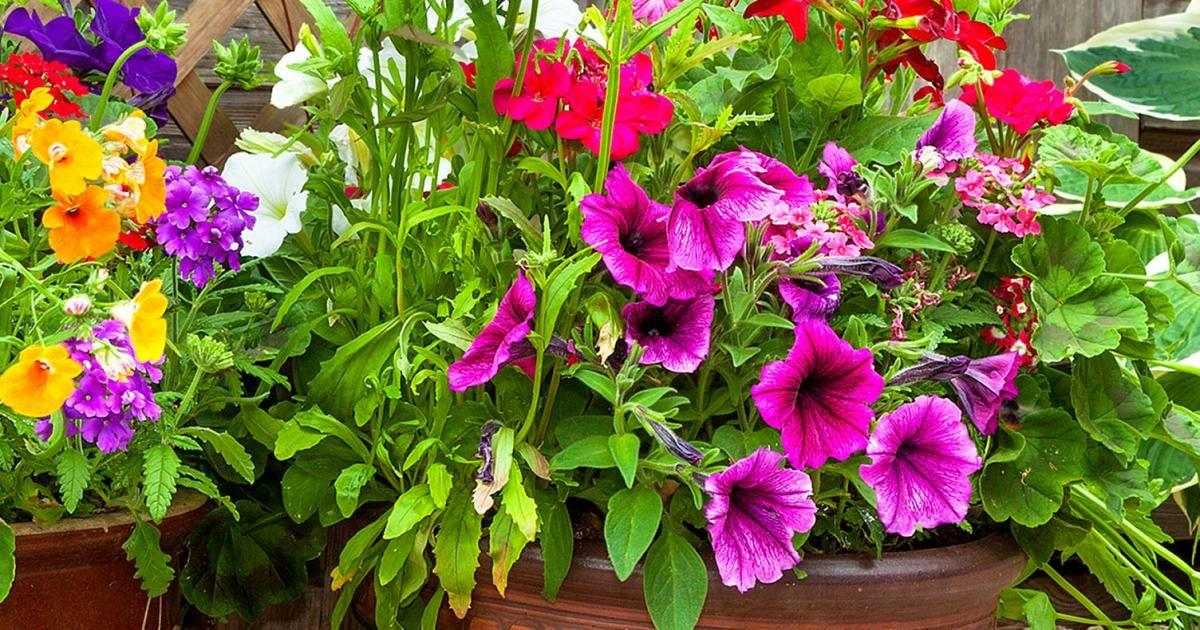 Plante Verte Exterieur : La Pause Jardin, nos conseils sur les pots d'extérieur