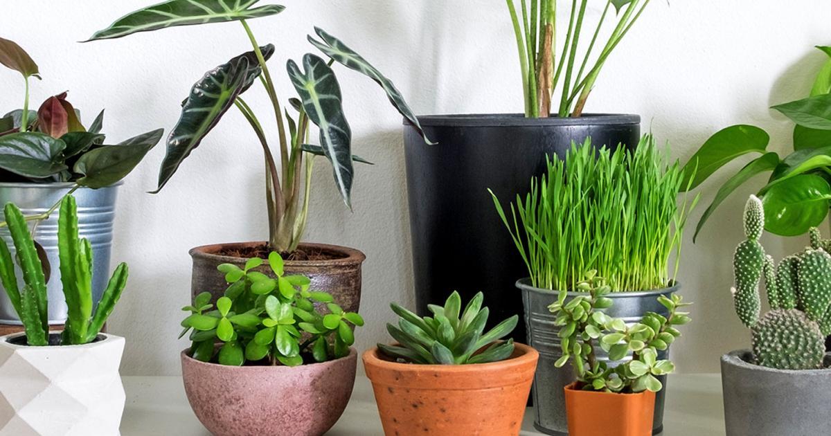 Best indoor plants, best houseplants   lovethegarden