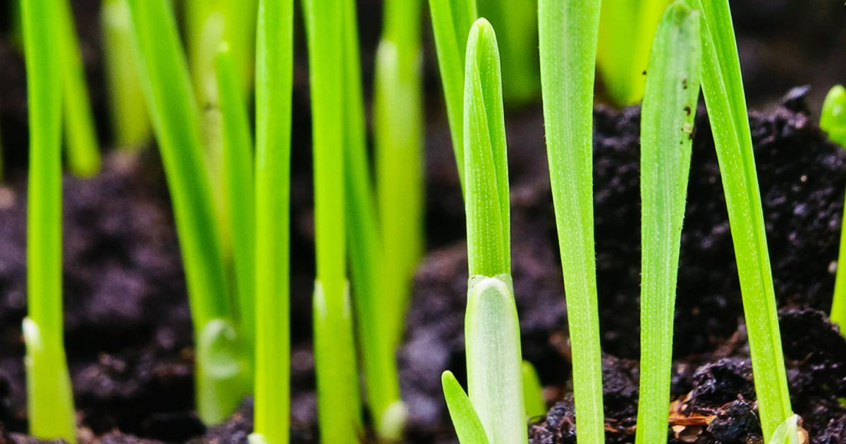 The best time to sow grass seed | lovethegarden