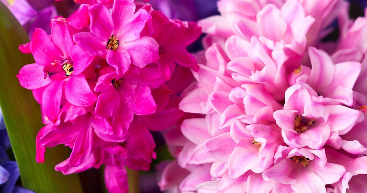 Top 10 Most Popular Spring Bulbs Love The Garden